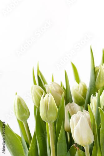 ladne-tulipany