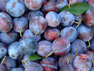 organic plums as food background