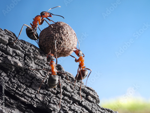 team of ants rolls stone uphill, teamwork concept