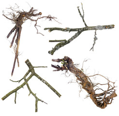 Branches and roots  set  for Halloween