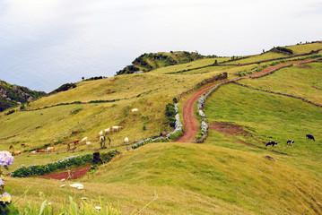 Pastrue landscape, Sao Jorge island, Azores