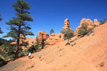 USA - Red canyon (Dixie National Forest)