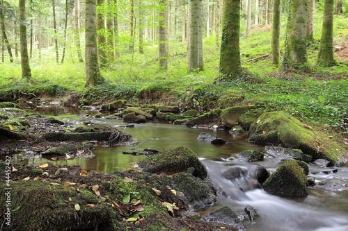 La petite source en forêt