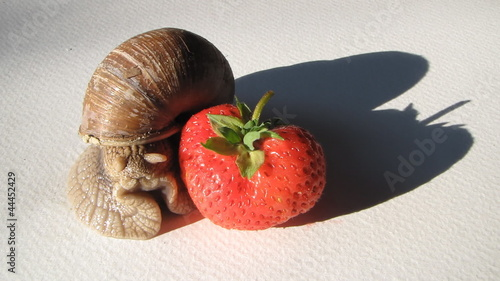 strawberries and shellfish