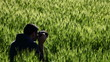 A photographer in a field of wheat