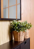 plants in room design