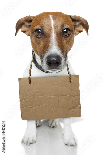 Dog with empty cardboard