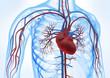 Leinwanddruck Bild - Herz-Kreislauf vor weiss 3