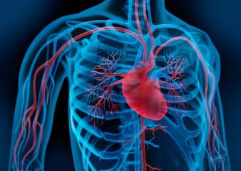 Herz-Kreislauf 3