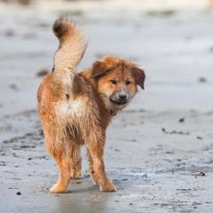Elo-Welpe am Strand schaut zurück