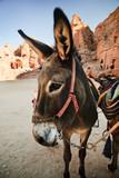 Fototapete Jordan - Uralt - Nutztiere