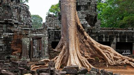 Riesenbaum im Banteay Kdei Tempel, Kambodscha