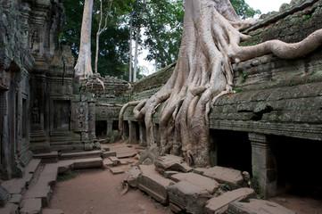 Riesen Wurzel im Ta Prom Tempel bei Angkor Wat