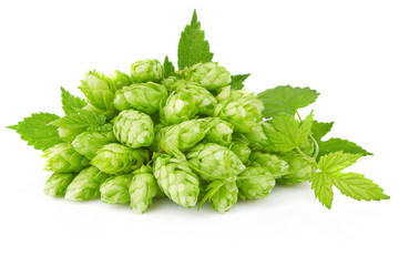 hop with green leaf and twig