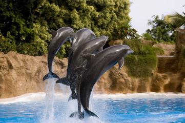 Delfines del espectáculo de Loro Parque, Tenerife