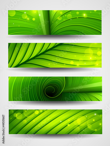 Collection of banners texture of green leaf