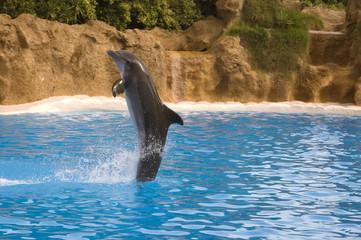 Delfín del espectáculo de Loro Parque, Tenerife