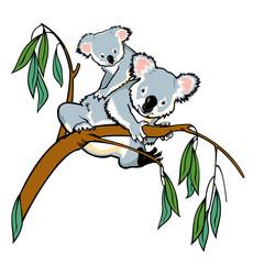 koala bear with joey climbing eucalyptus branch