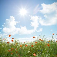 Wildblumenfeld mit Mohnblume, Kornblume und Kamille