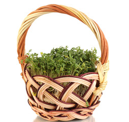 Fresh garden cress on basket isolated on white