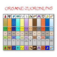 organe - zeit - zuordnungstafel