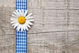 Margerite und blaue Schleife vor Holzhintergrund - 44515029