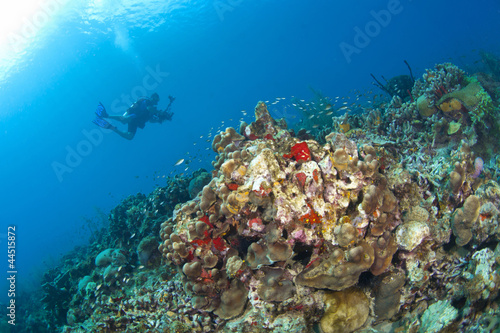 Photographer on a St Lucia Reef