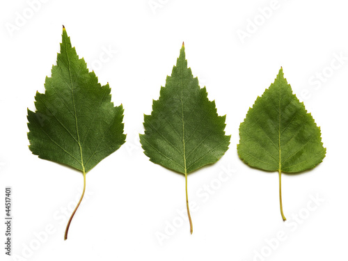 three green leaves