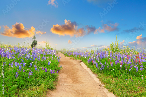 Hiking trail with wild flowers and sunset. Beautiful landscape . © Iriana Shiyan