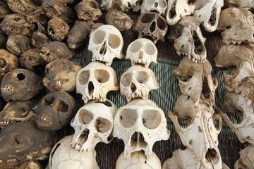 Monkey skull on voodoo fetish market, Togo, Africa