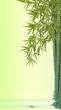 concept bambou nature zen