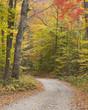Lane through autumn woods