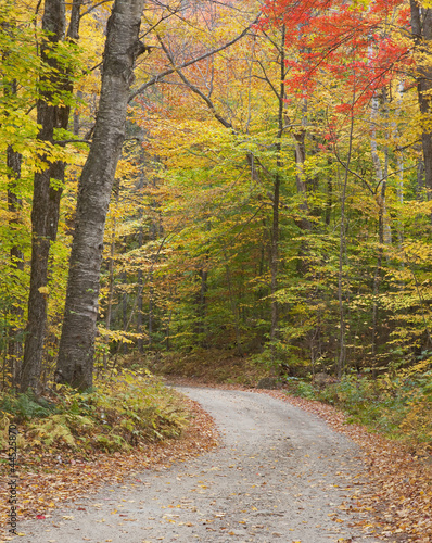 Lane through autumn woods