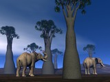 Elephants in the savannah