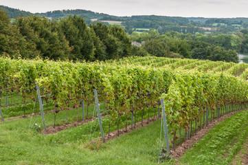 Weinland Schleswig-Holstein
