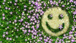 flower smiley on the grass decorative background - 44532668