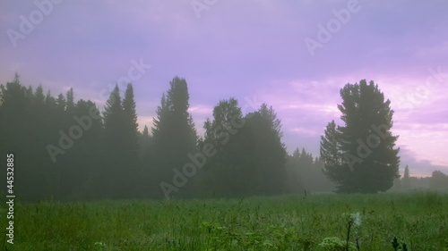 summer morning in foggy forest timelapse
