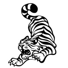 tigre BN