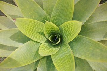 fleurs etoilée verte