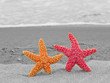 A Red and Orange Starfish on the Shoreline with Waves