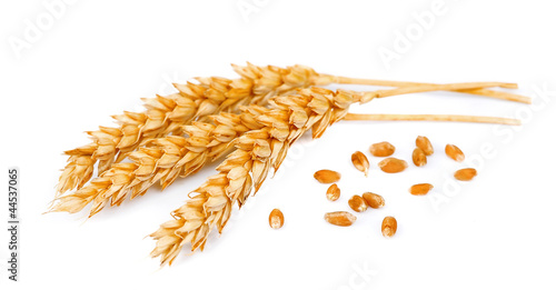 wheat with grains