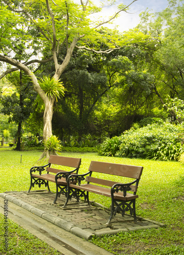 Bench in beautiful garden