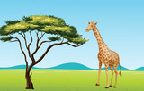 Giraffe by a tree