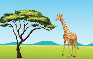 Giraffe by a tree
