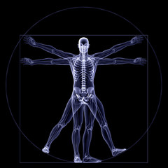 Skeleton X-Ray - Vitruvian