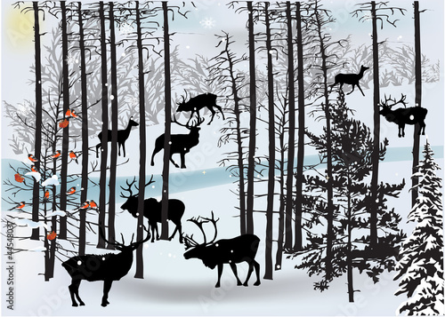 Fototapeta deers in white winter landscape
