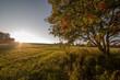 Fototapeten,eberesche,natur,outdoors,ländliche