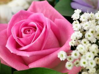 Pink cut rose