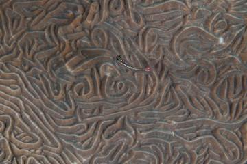 Textura marina
