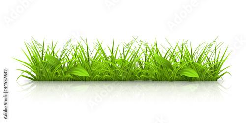 Grass - 44557632